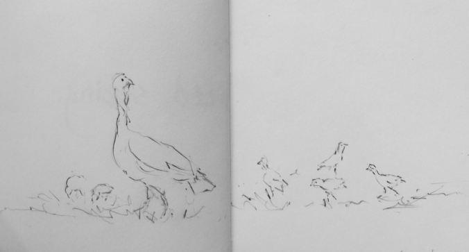 TurkeyHen&Chicks