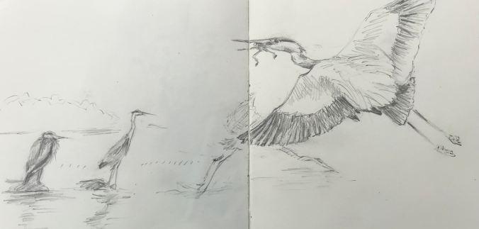 Heron/frog