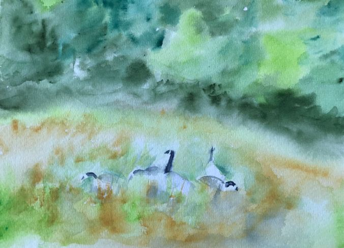 Geese in pasture