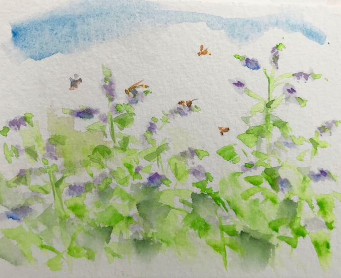 August: Pollinators in the Mint